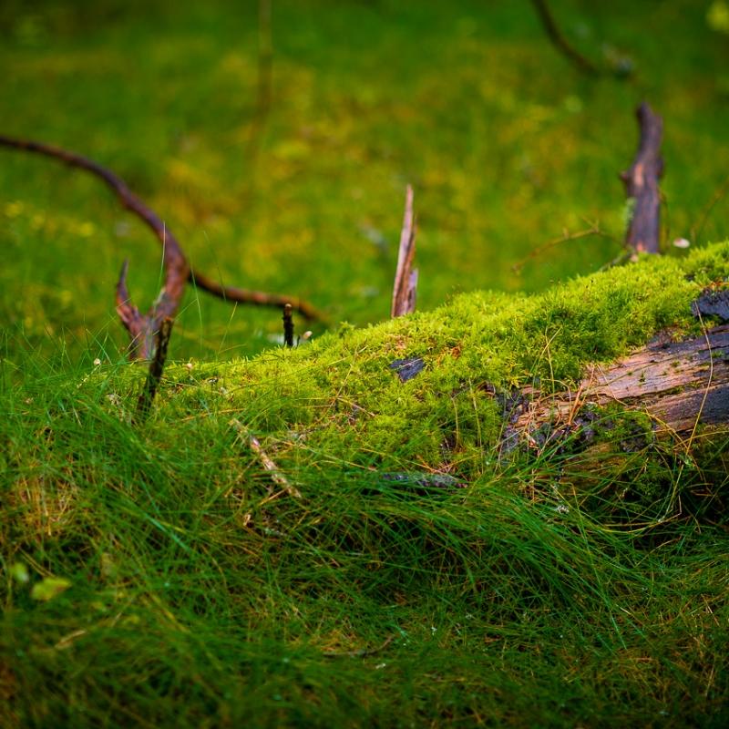 Naturens kretsløp i arbeid